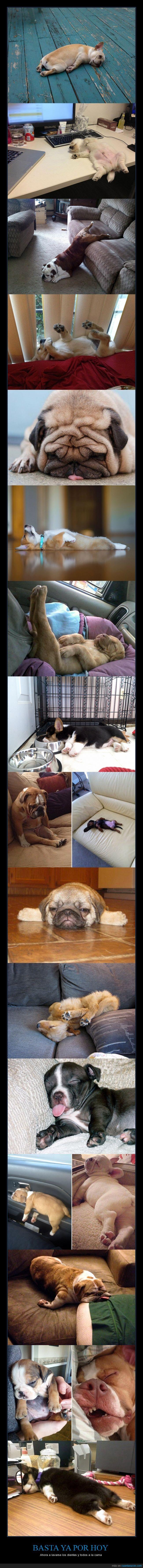 perros sueño