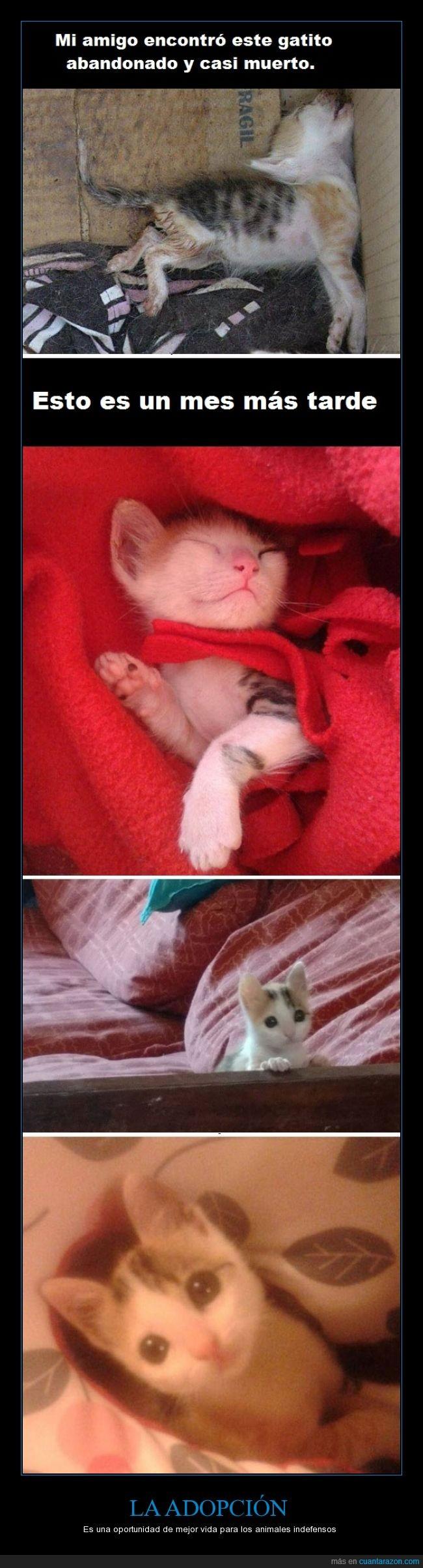 humor,vida. adoptar,adopción,animales,rescatar,salvar,gato