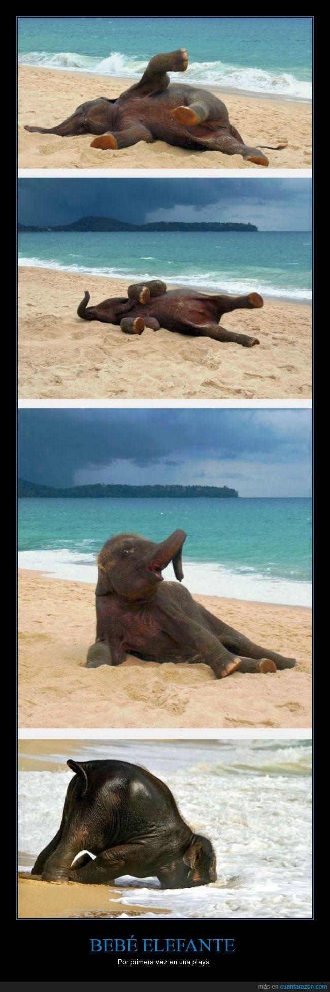 beb elefante