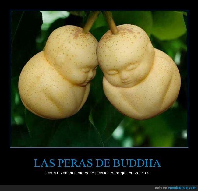 peras_de_buddha