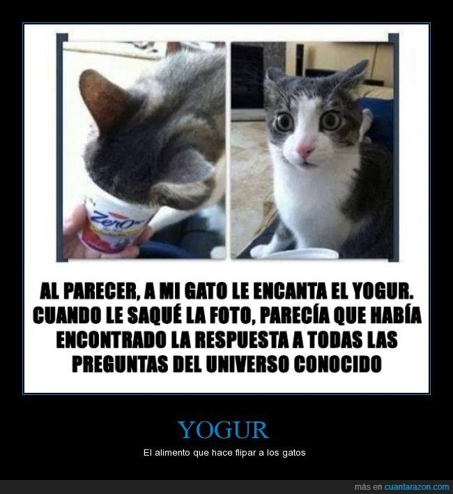 a_veras_flipar