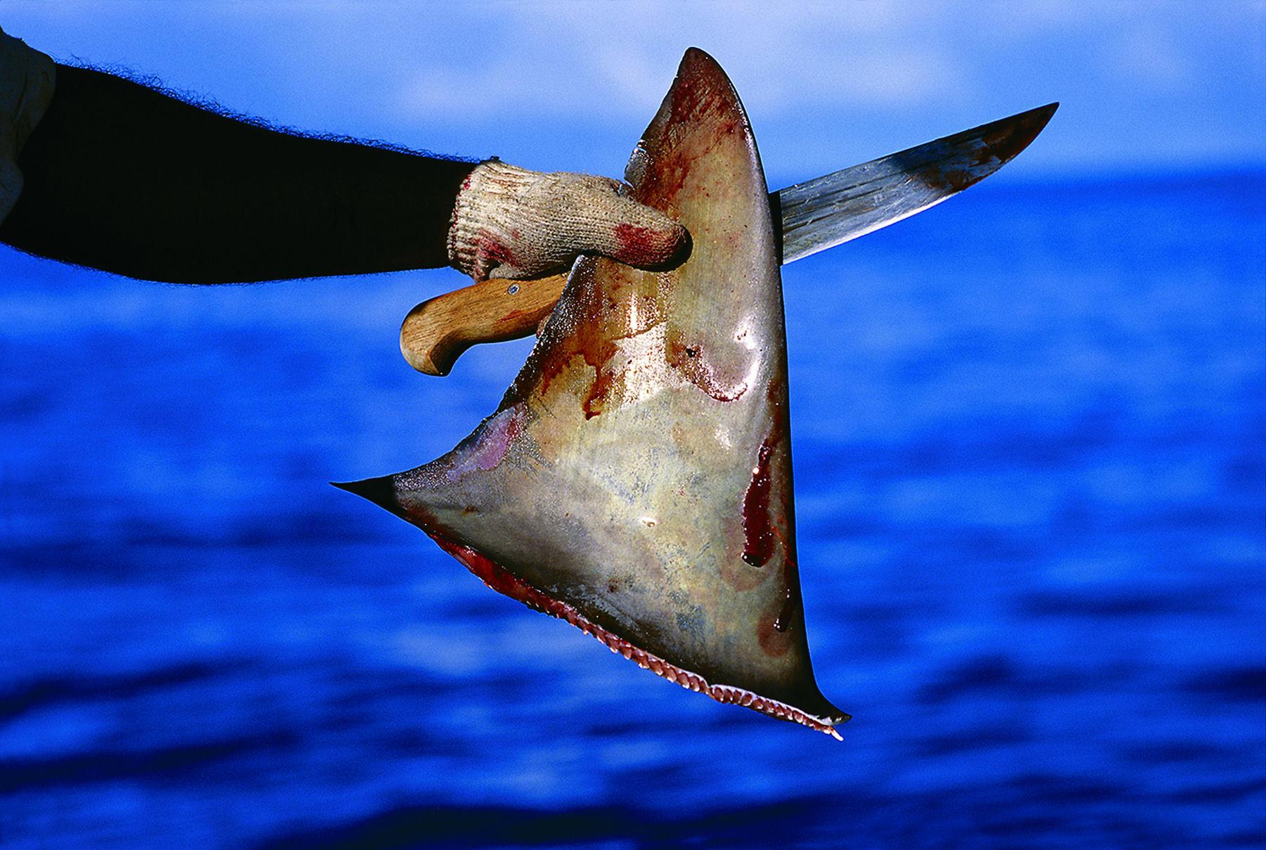aleta tiburon