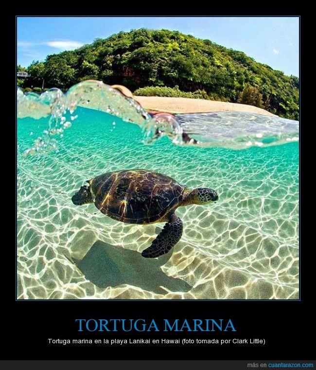 a_tortuga_marina