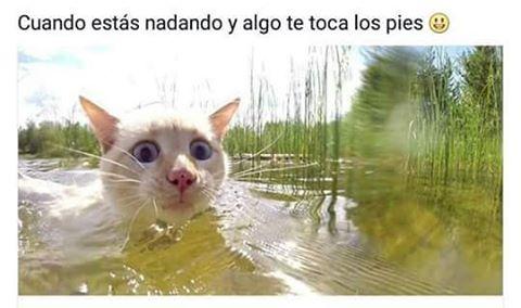 aa bb cuando