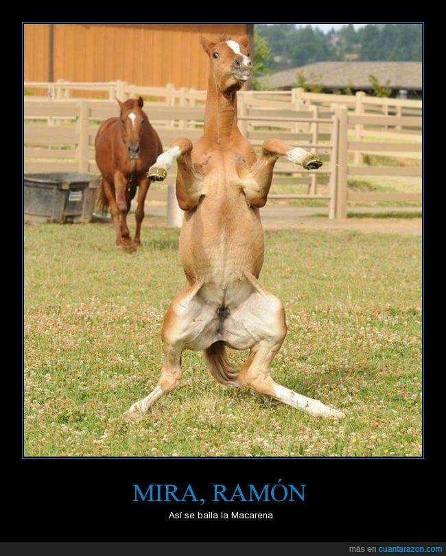mira_ramon