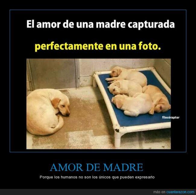 a b_amor_de_madre