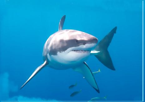 8-descubrimientos-estomago-tiburon