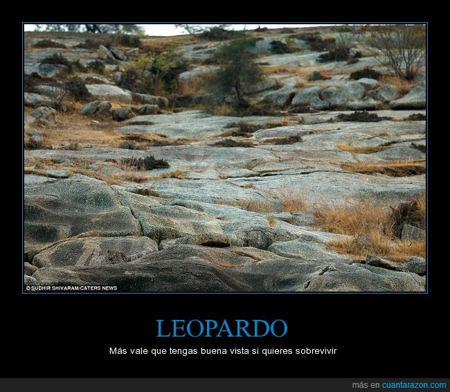 a b c leopardo_escondido