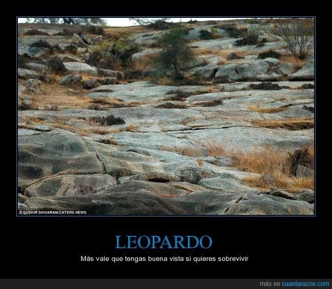 a b c leopardo_escondido