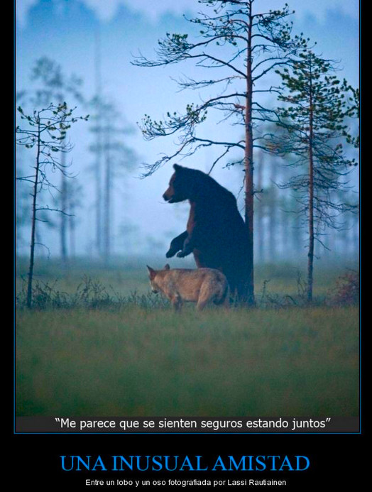 a b c oso-lobo 2