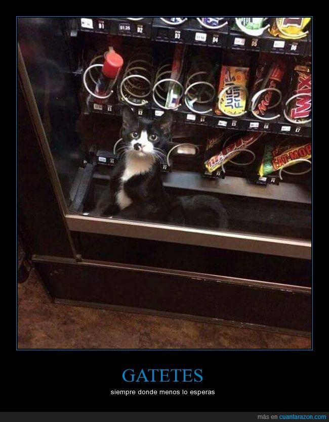 a gatetes