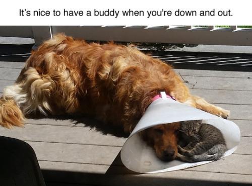 aa gato perro