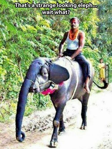 elefann