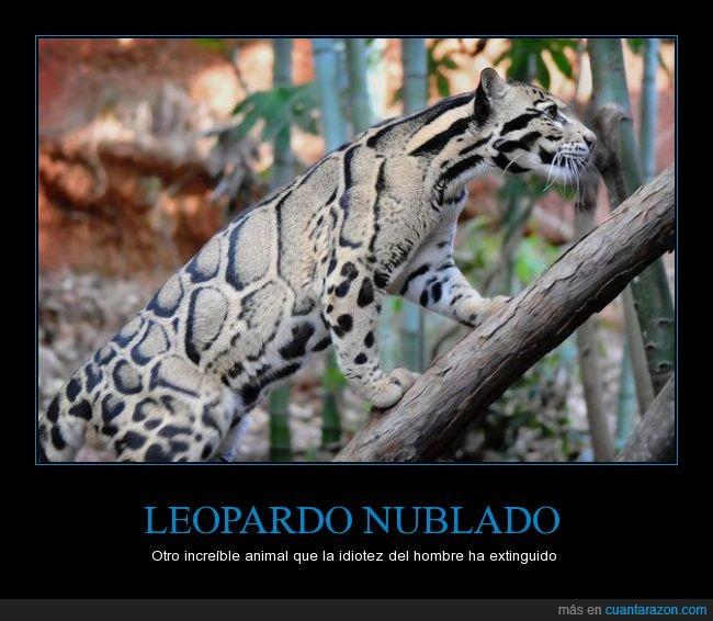 este_animal