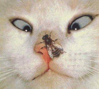 gato mos