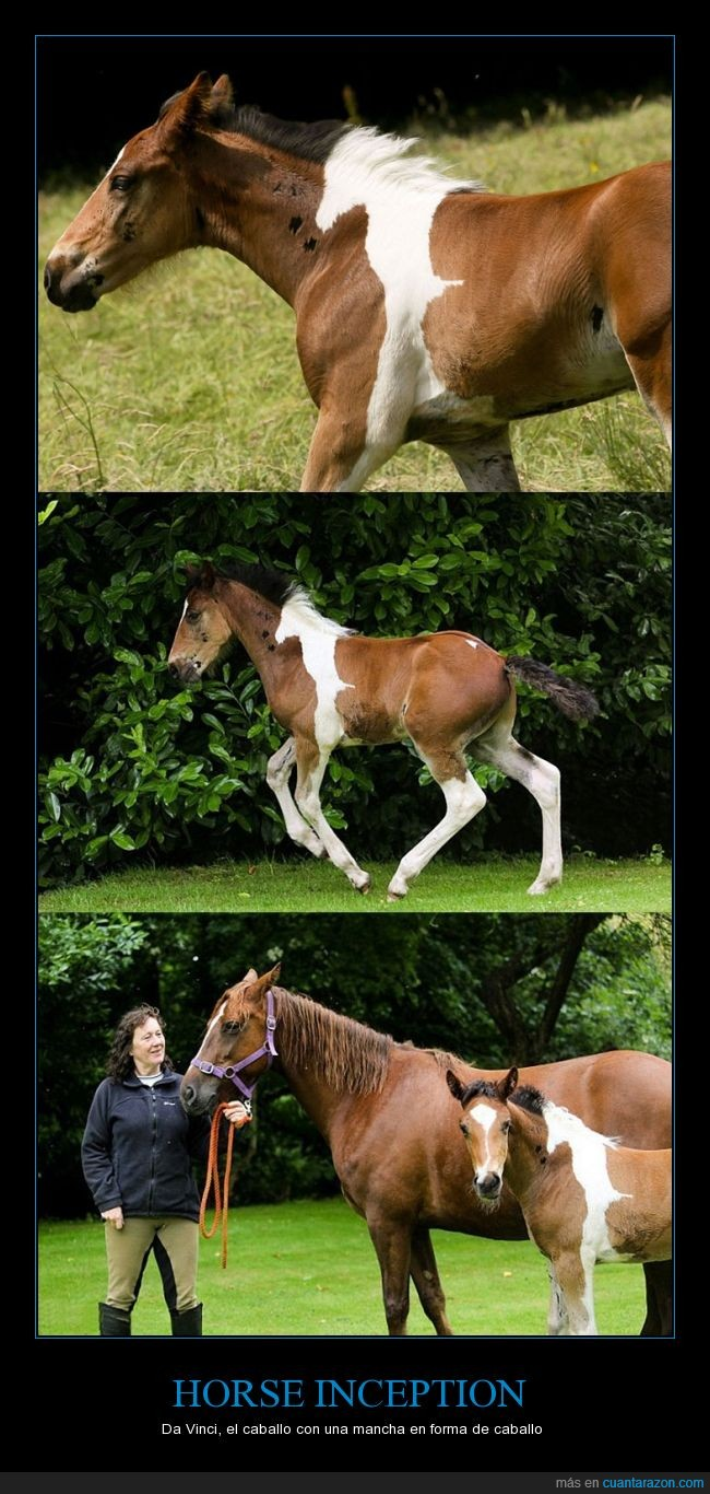 horse_inception