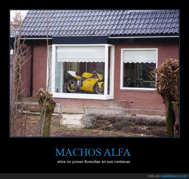 machos_alfa