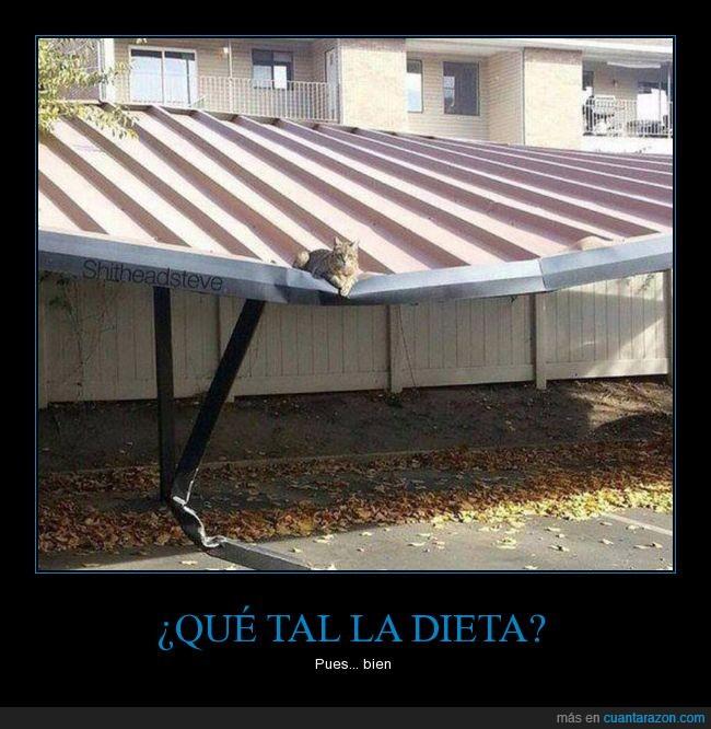 que_tal_la_dieta