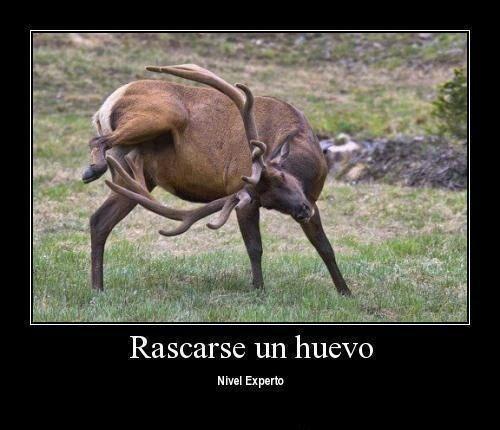 rascarrr