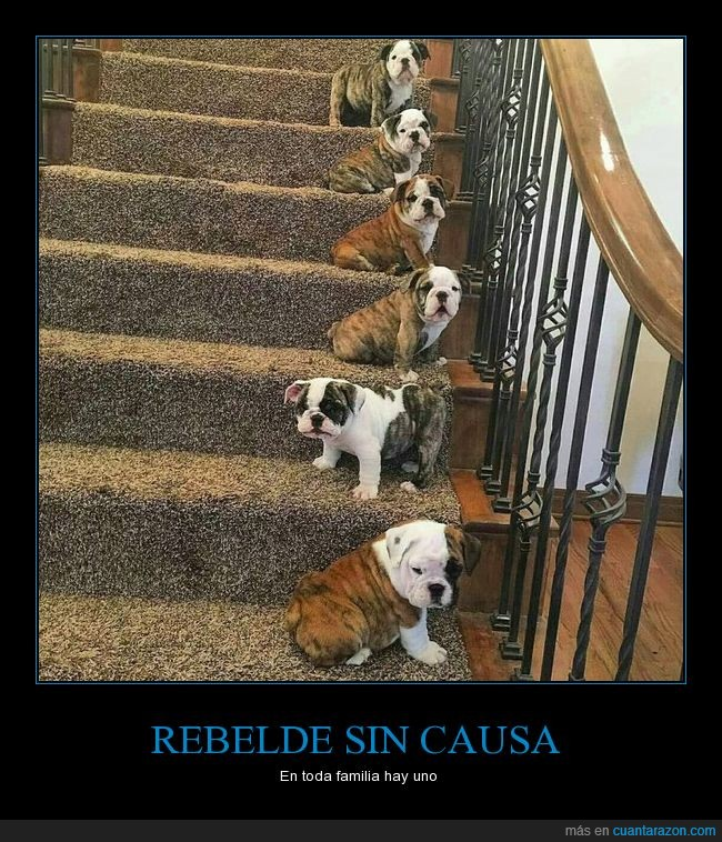 rebelde_sin_causa