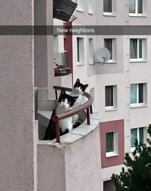 rr gatos