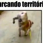 Vídeo para reírte y no para sobre animales