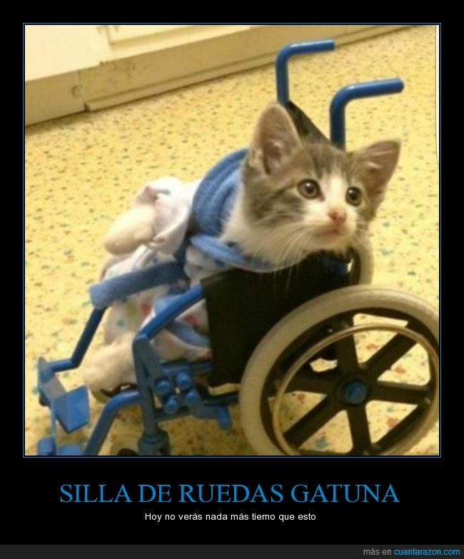 a b c ruedas_gatuna
