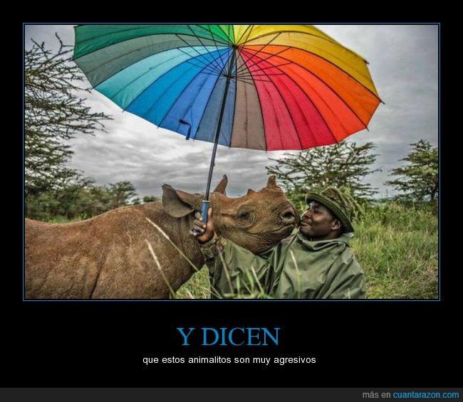 y_dicen