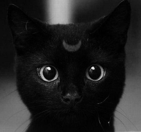 gato-luna-halloween