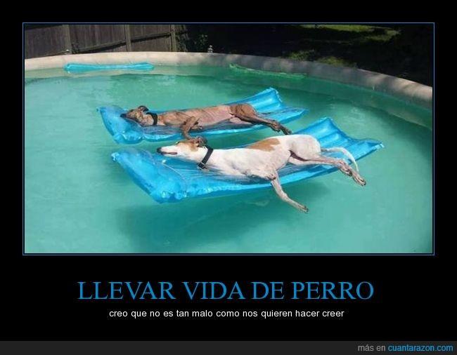vida_de_perro