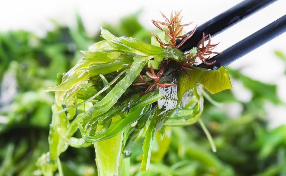 kombu-kelp