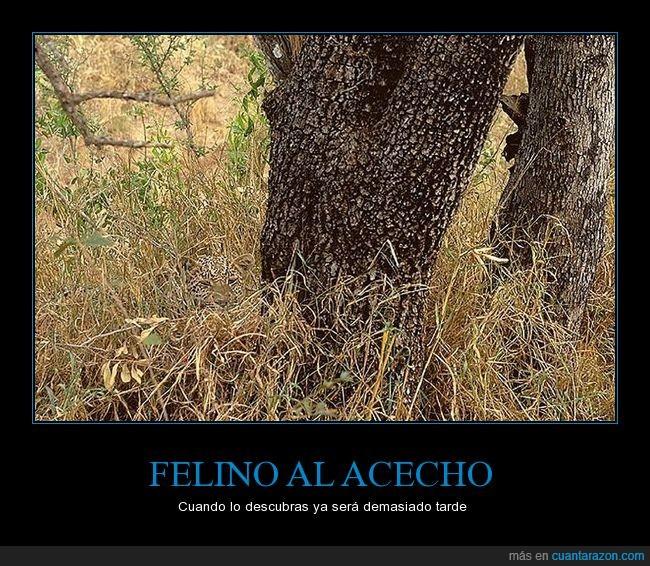 ffelino_al_acecho