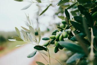 El aceite de oliva, seña de identidad de Jaén