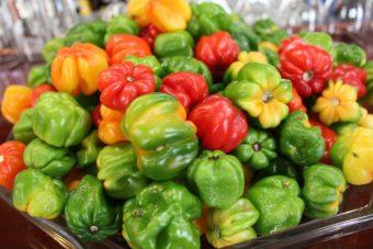 Descubre los beneficios de la comida ecológica